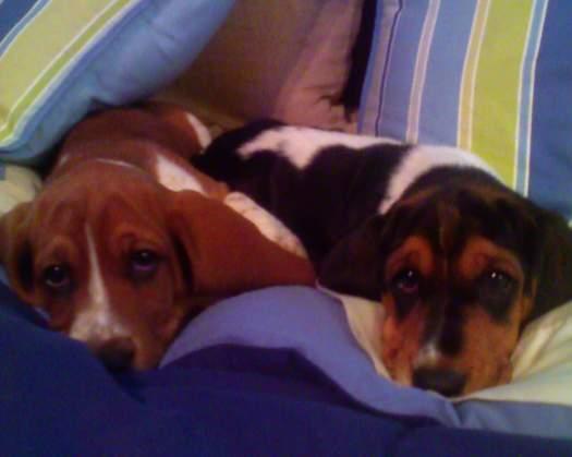 puppies-0181